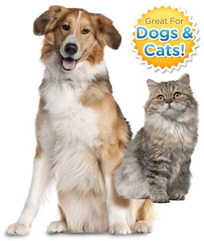Great For Dogs & Cats!
